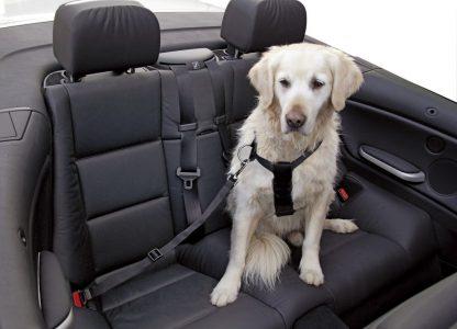 KERBL Szelki samochodowe dla psa